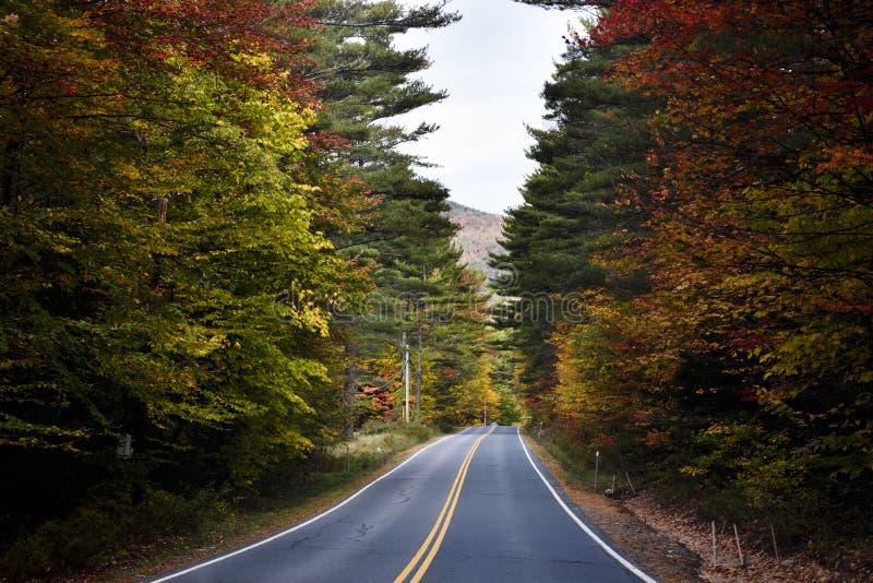 Herbstlaubstraße in Neu-England stockbild