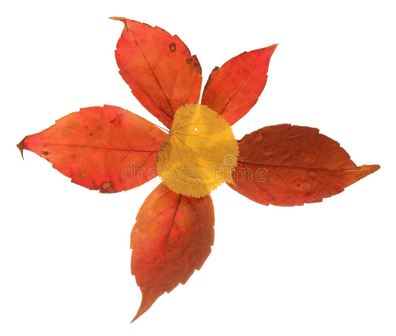 Herbstlaubzusammensetzung lizenzfreies stockfoto