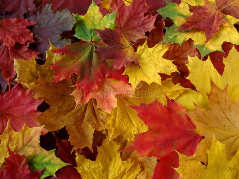 Herbstliche Ansammlung lizenzfreie stockfotografie