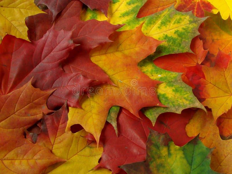 Herbstliche Ansammlung stockbild