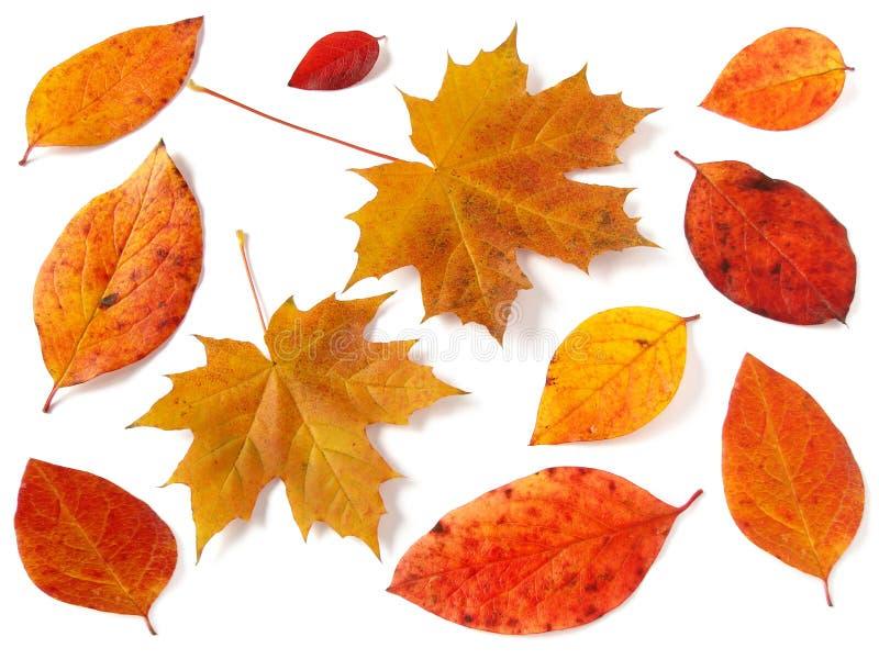 Herbstliche Ansammlung lizenzfreie stockfotos