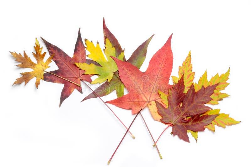 Herbstliche Ansammlung stockfotografie