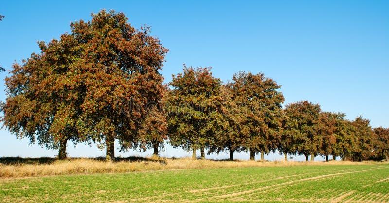 Herbstliche Ansicht der Gasse von Chokeberry stockfotos
