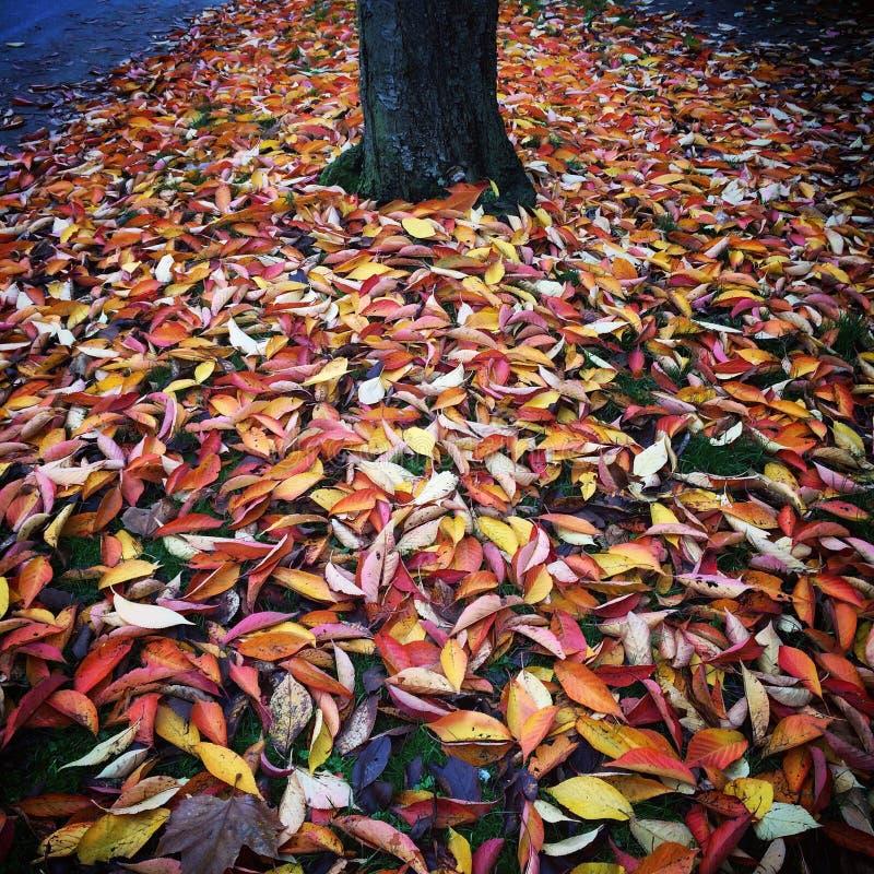 Herbstliche Blätter lizenzfreie stockfotos
