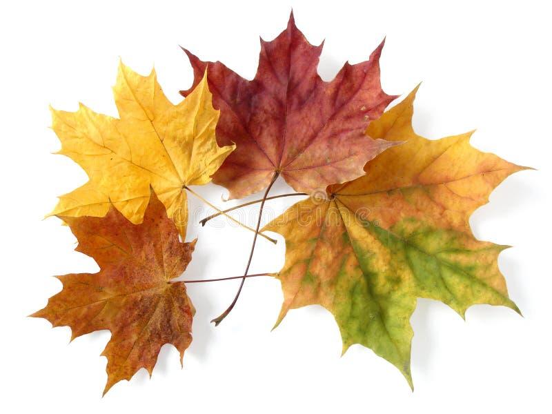 Herbstliche Blätter stockbilder