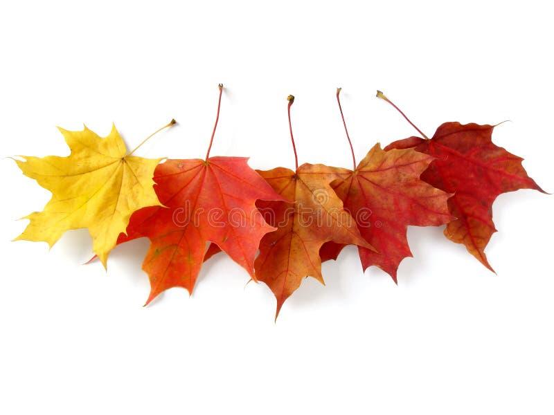 Herbstliche Blätter stockbild