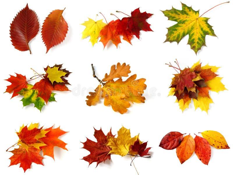 Herbstliche Blattansammlung stockfotos