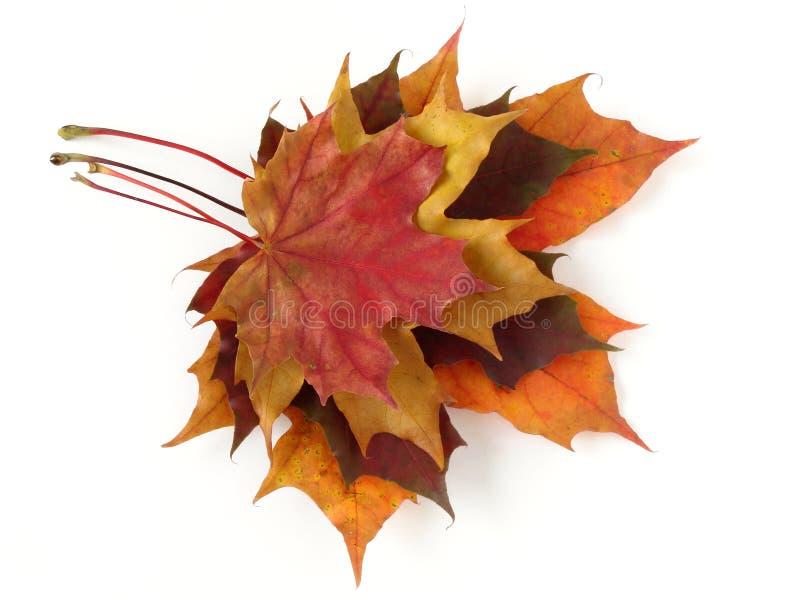 Herbstliche Blattpalette stockbild