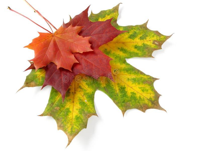 Herbstliche Blattpalette lizenzfreie stockbilder