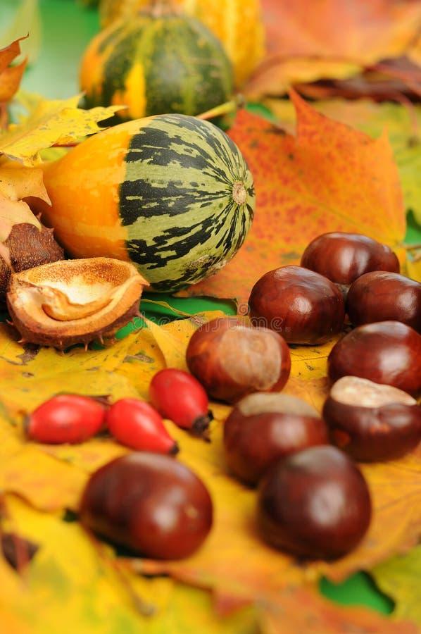 Herbstliche Dekoration stockfoto