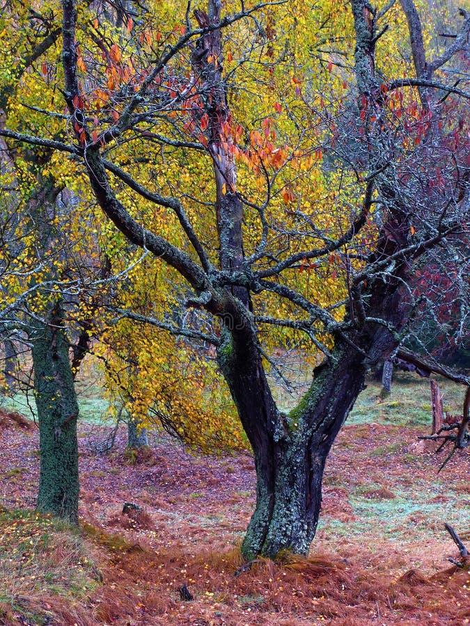 Herbstliche Farben lizenzfreies stockbild