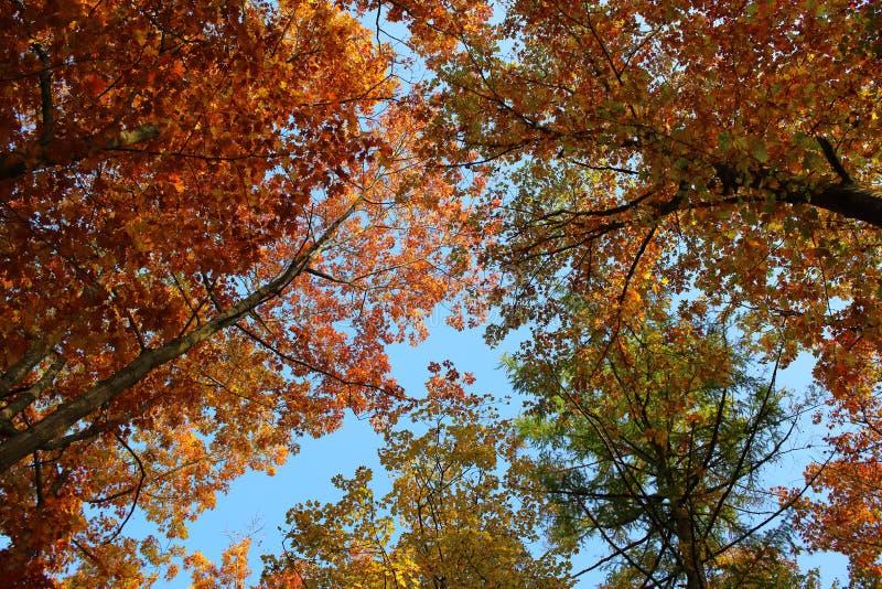 Herbstliche Farben der Überdachung stockfotografie