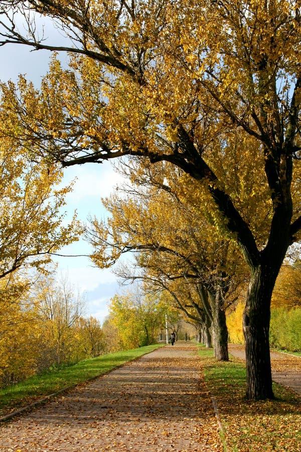 Herbstliche Gasse lizenzfreie stockbilder