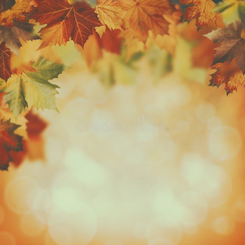 Herbstliche Hintergründe der Schönheit lizenzfreies stockfoto