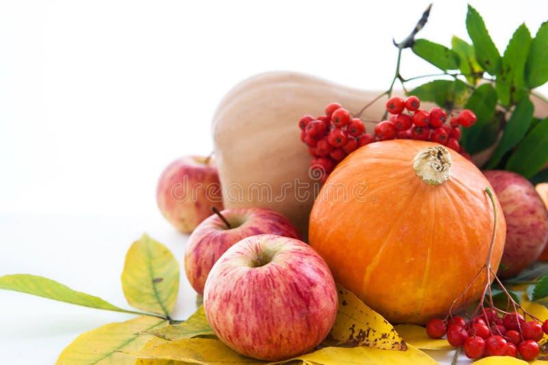Herbstliche Kürbise, Äpfel und ashberry mit Fallblättern stockfotografie