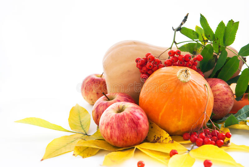 Herbstliche Kürbise, Äpfel und ashberry mit Fallblättern stockbild