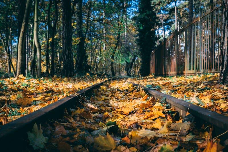Herbstliche kurvende Bahn lizenzfreie stockfotografie
