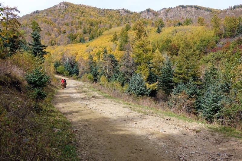 Herbstliche Landschaft lizenzfreie stockfotos