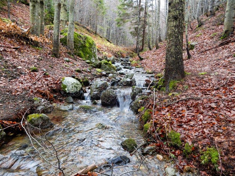 Herbstliche Landschaft mit Wald der Buche und des Gebirgsbachs, Penna-Berg, der regionale Naturpark Aveto, Italien lizenzfreie stockfotografie