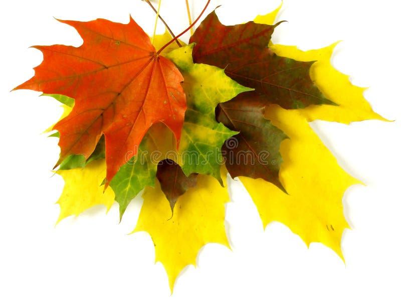 Herbstliche Palette lizenzfreie stockfotografie