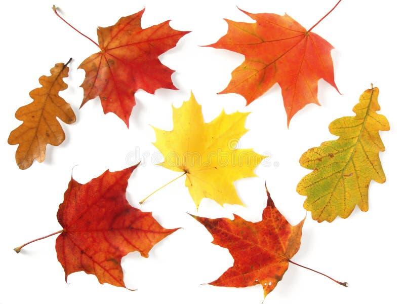 Herbstliche Palette stockfotos