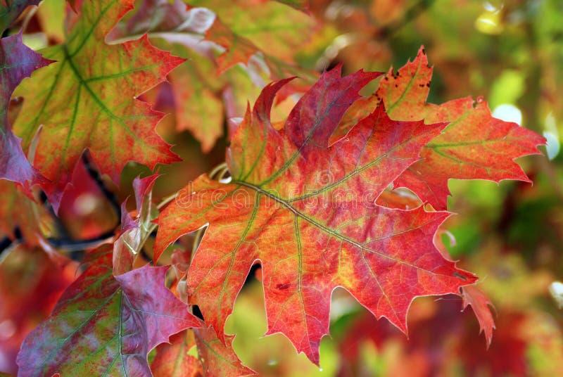 Herbstliche Verzierung lizenzfreies stockbild