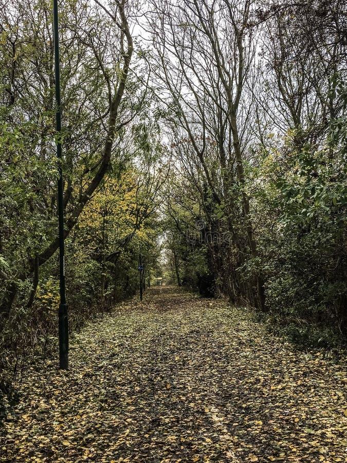 Herbstliche Wege stockfoto