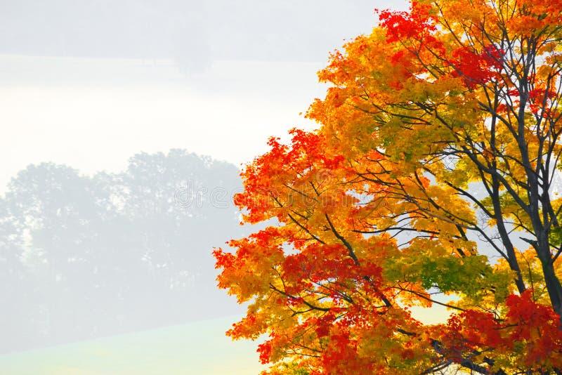 Herbstlicher Baum lizenzfreies stockfoto