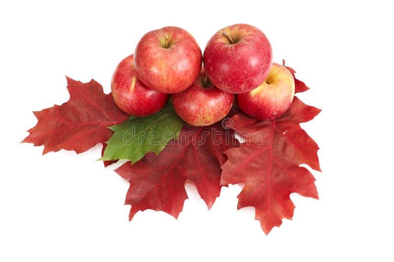Herbstlicher Fruchtaufbau. lizenzfreie stockfotos