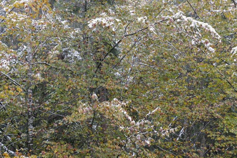 Herbstlicher Gebirgswald lizenzfreie stockbilder