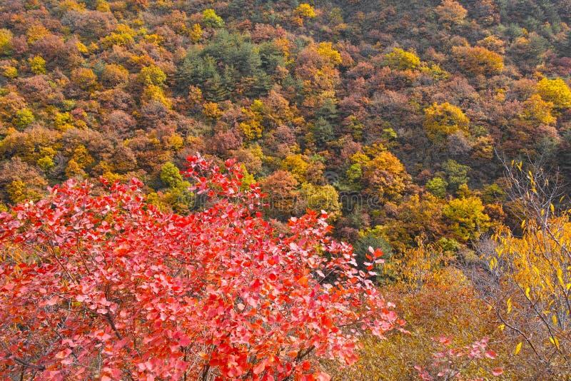 Herbstlicher Gebirgswald lizenzfreies stockbild