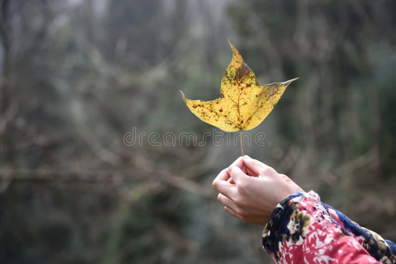 Herbstlicher melancholischer Tag lizenzfreie stockfotos