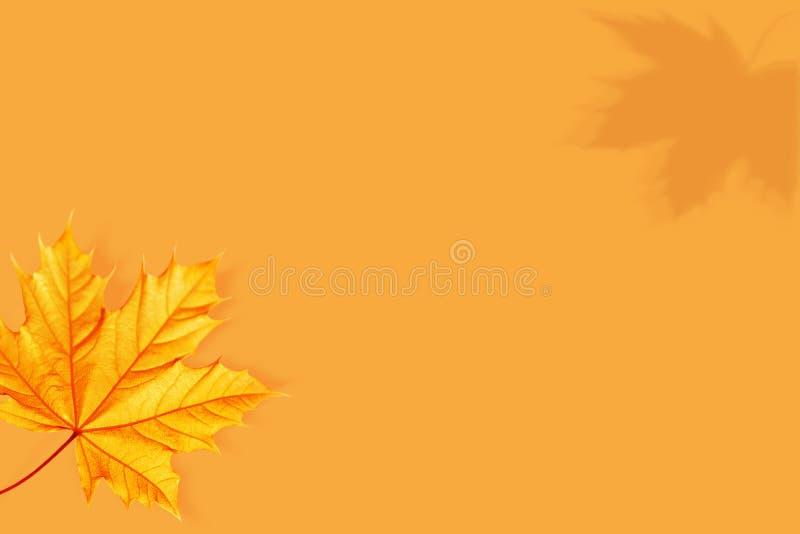 Herbstlicher natürlicher Hintergrund in einer unbedeutenden Art Gelbes Rotahornblatt auf einem hellorangeen Hintergrund Kreatives stockfoto