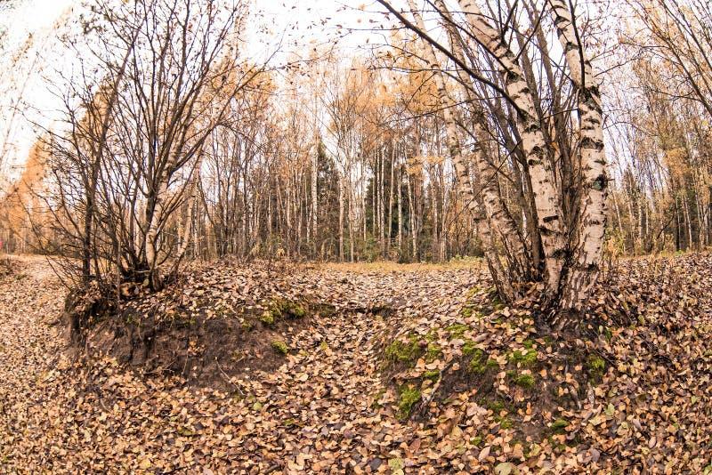 Herbstlicher Park Herbstb?ume und -bl?tter Fall stockbild