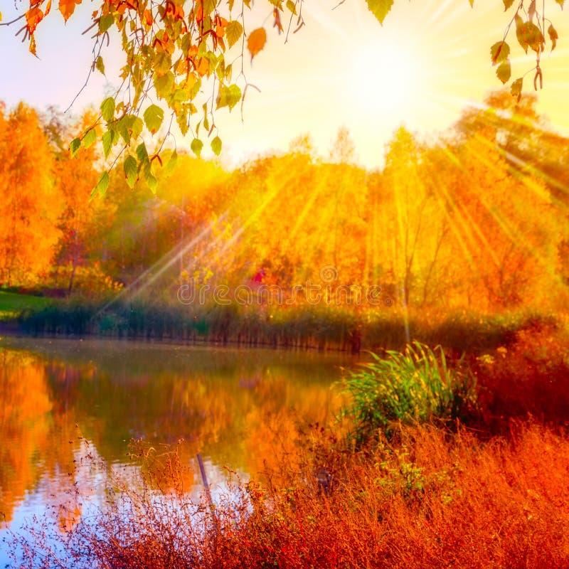 Herbstlicher Seebirken-Sonnenlicht Herbst stockfotos
