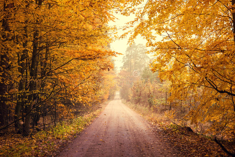 Herbstlicher Wald stockfotografie