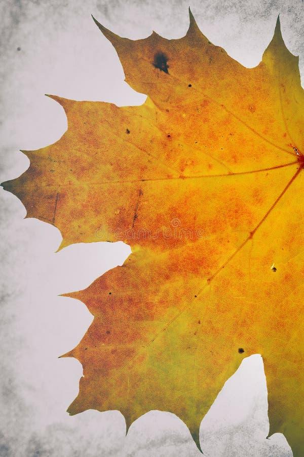 Herbstliches Blattmotiv mit Nachbearbeitungseffekten lizenzfreie stockbilder