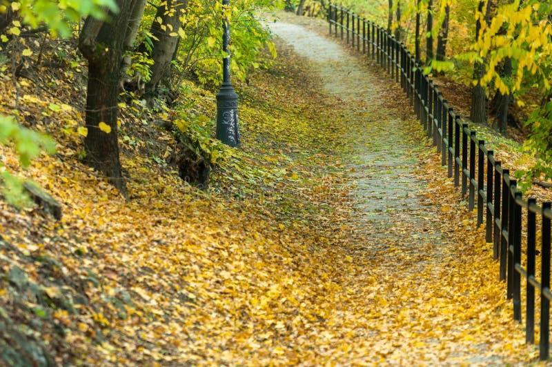 Download Herbstliches Foto In Einem Wald Stockfoto - Bild von orange, laub: 26365272