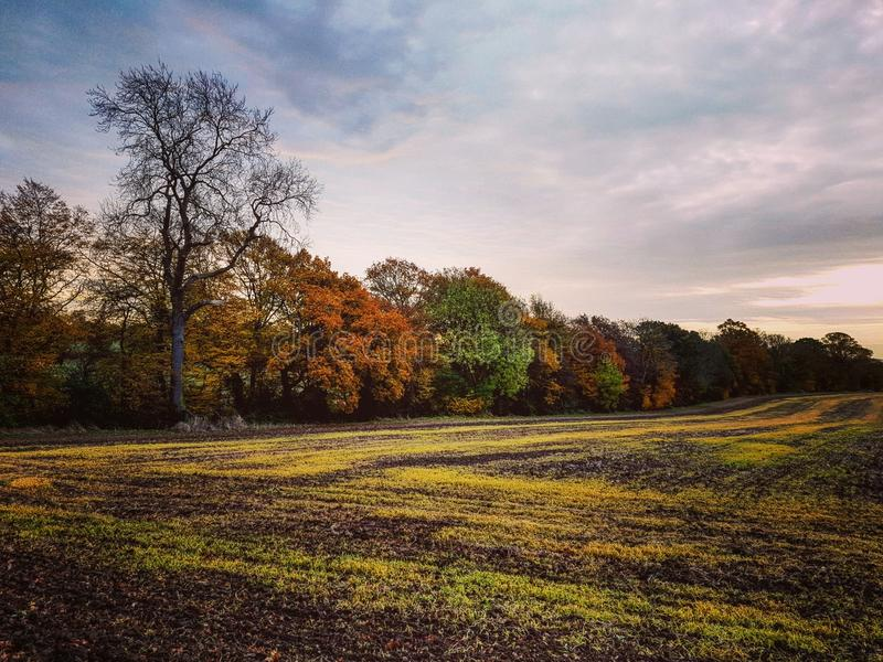 Herbstlinien lizenzfreie stockbilder