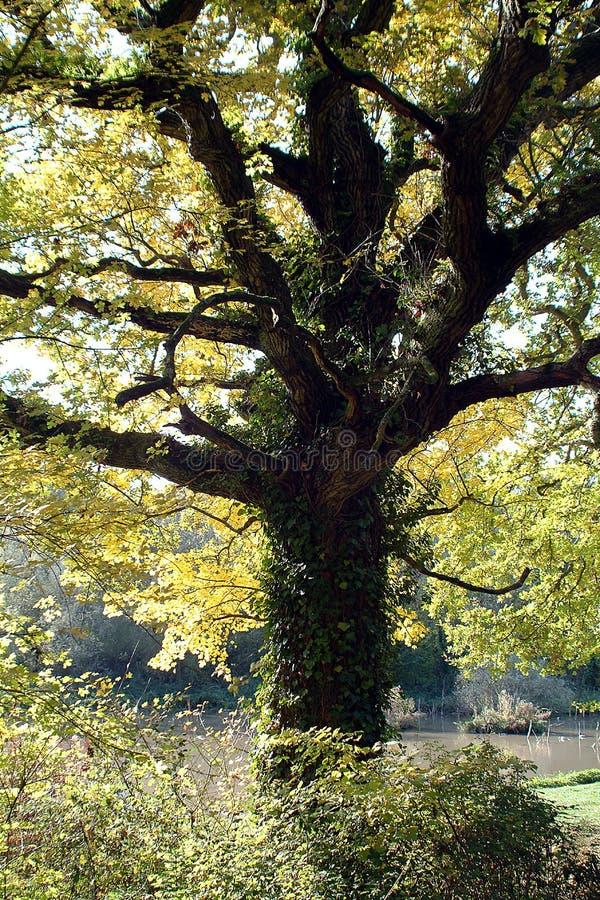 Herbstmagie