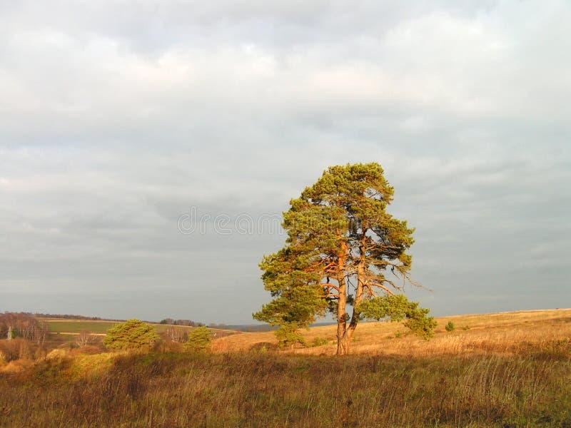 Herbstmorgen. stockbild