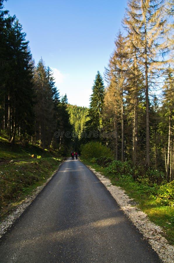 Herbstmorgen auf Trekkingsweg an Radocelo-Berg stockfotos