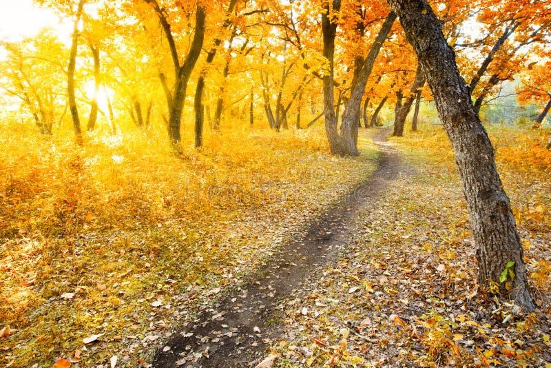 Herbstmorgenpark stockbilder