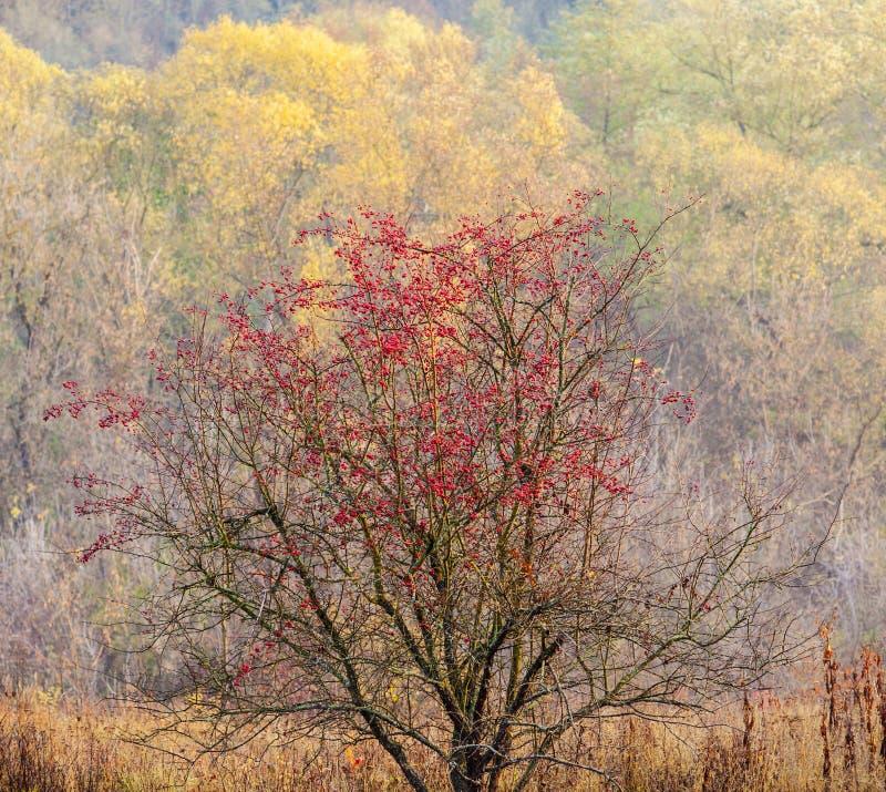 Herbstmotiv lizenzfreie stockfotos