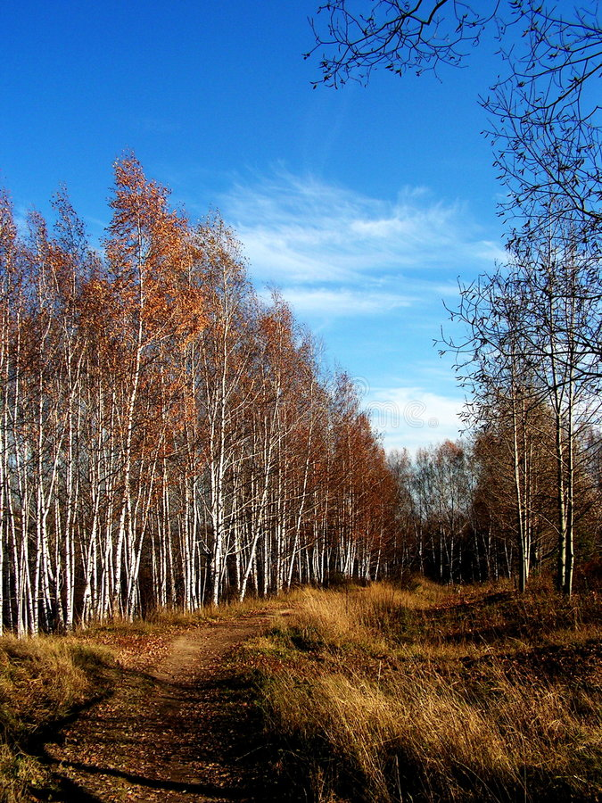 Herbstmotiv lizenzfreies stockfoto
