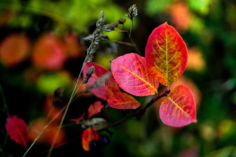 Herbstmotive lizenzfreies stockbild