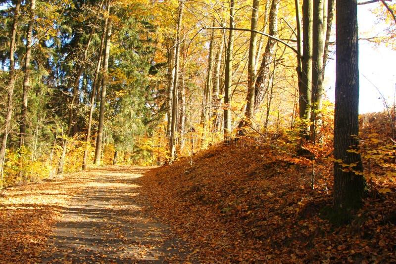Herbstnatur mit seinen bunten B?umen lizenzfreie stockfotos
