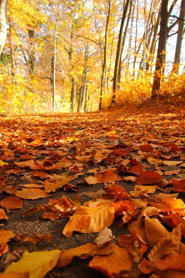 Herbstnatur mit seinen bunten B?umen stockfotos