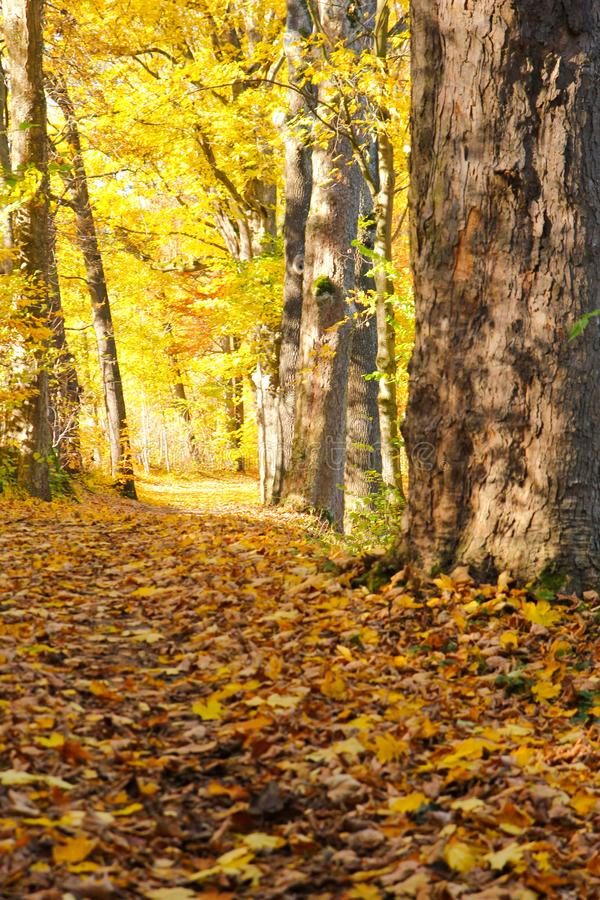 Herbstnatur mit seinen bunten B?umen lizenzfreies stockfoto