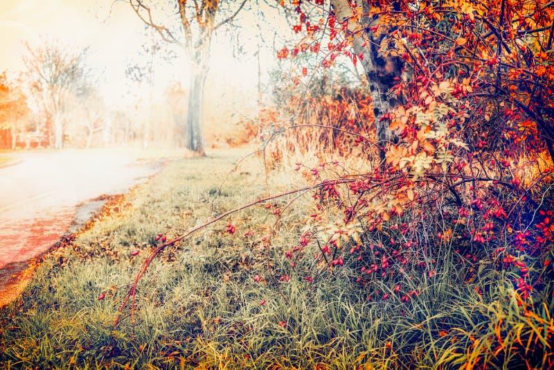 Herbstnaturlandschaft mit Straße und reizendem Fallbaumlaub lizenzfreies stockfoto